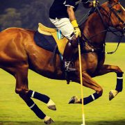 Sports | Polo, Argentine Polo Open Championship, November, Buenos Aires, Argentina