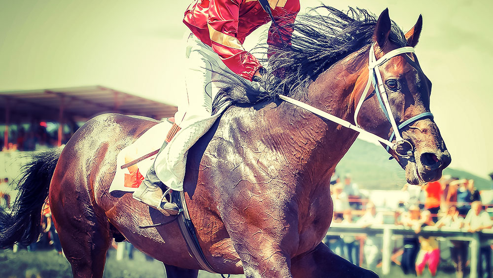 Sports | Equestrian, Kentucky Derby, May, Churchill Downs, Kentucky, USA
